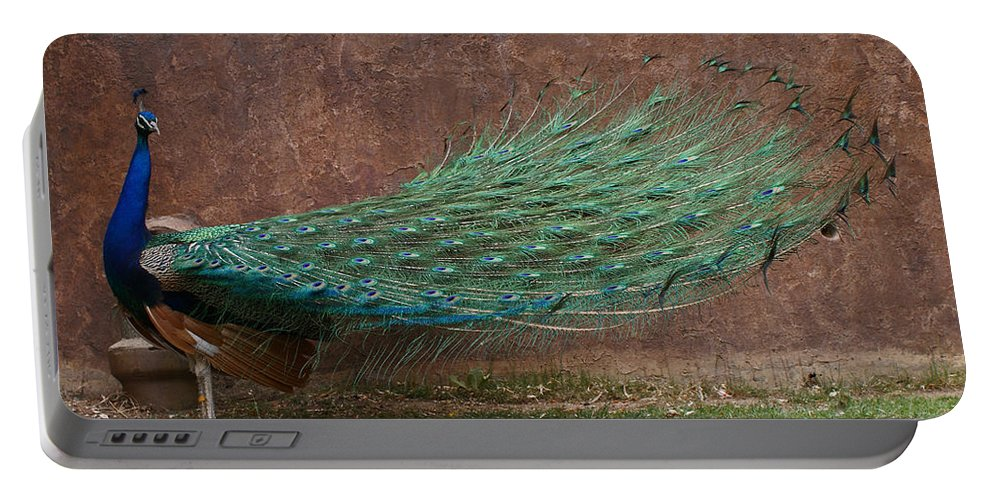 Bird Portable Battery Charger featuring the photograph A Peacock by Ernie Echols