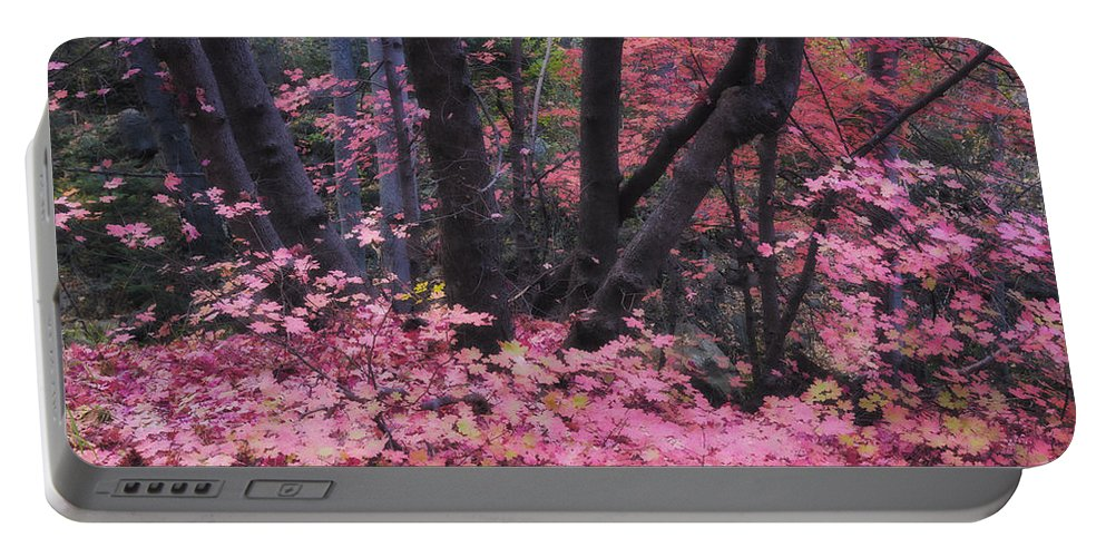 Pink Maple Tree Portable Battery Charger featuring the photograph A Pink Autumn by Saija Lehtonen
