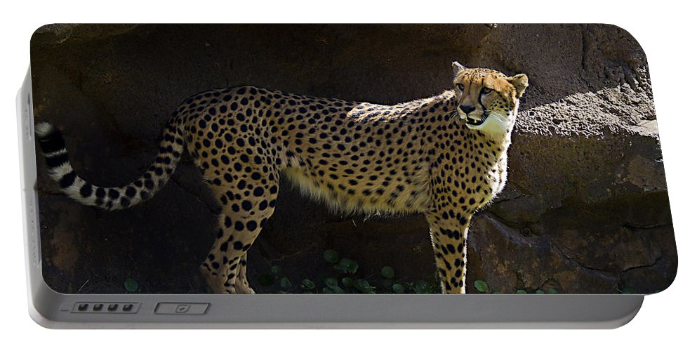 Tigers Portable Battery Charger featuring the photograph A Place In The Shade by Ken Frischkorn