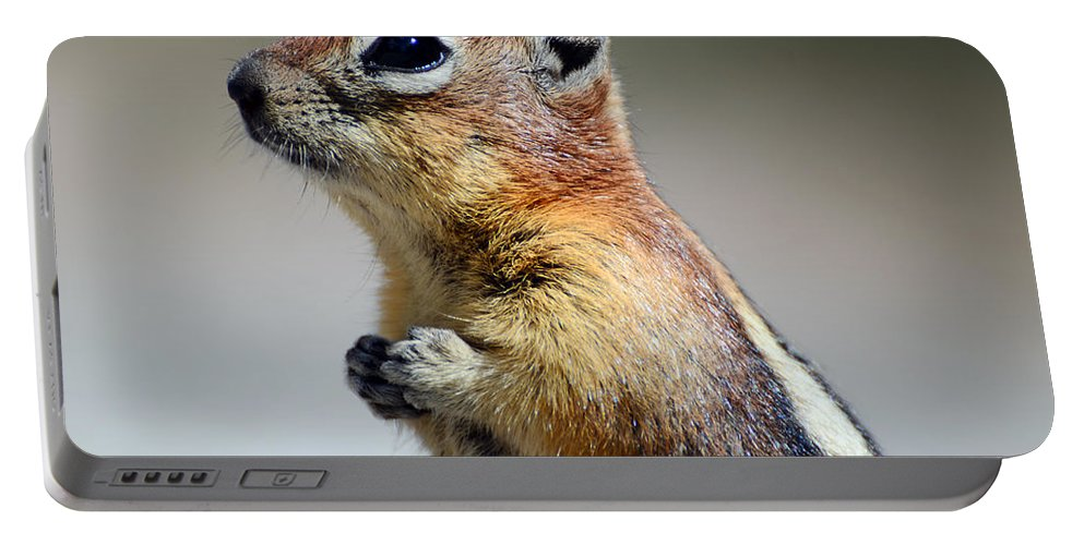 Chipmunk Portable Battery Charger featuring the photograph A Profile In Chipmunk by La Dolce Vita