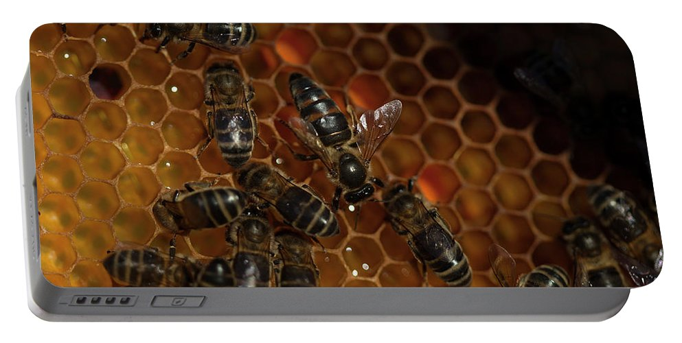 Worker Bees Portable Battery Charger featuring the photograph A Queen Bee Walks In The Center by Chico Sanchez