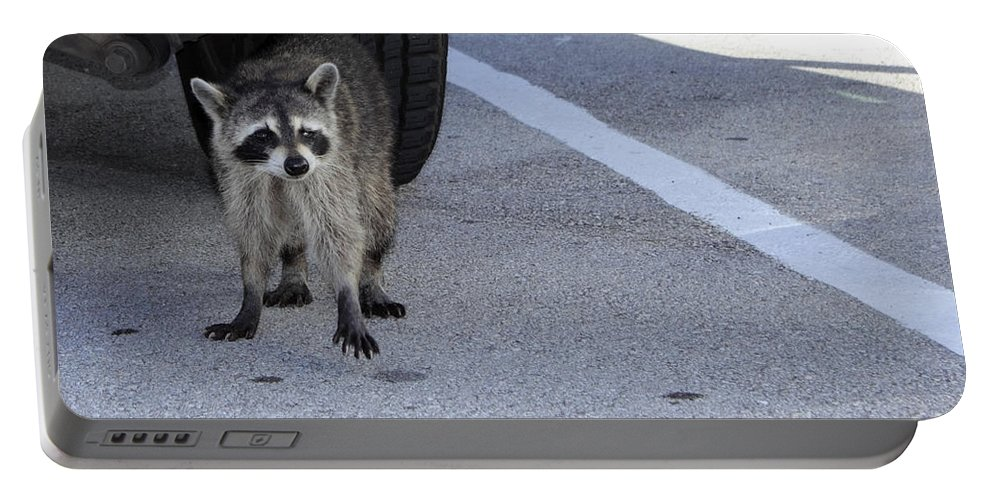 Raccoon Portable Battery Charger featuring the photograph A Raccoon In Florida by Lee Serenethos
