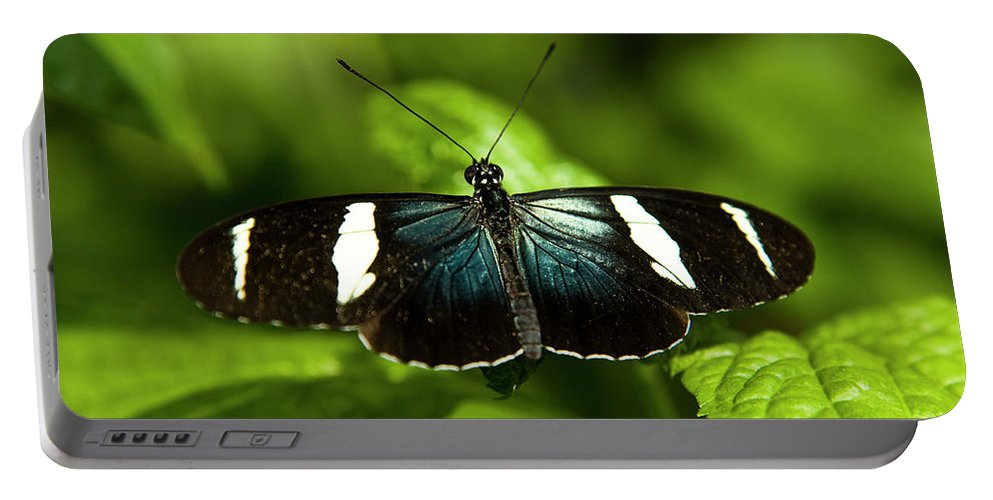 Antennas Portable Battery Charger featuring the photograph A Sara Longwing Butterfly Heliconius by Henry Georgi