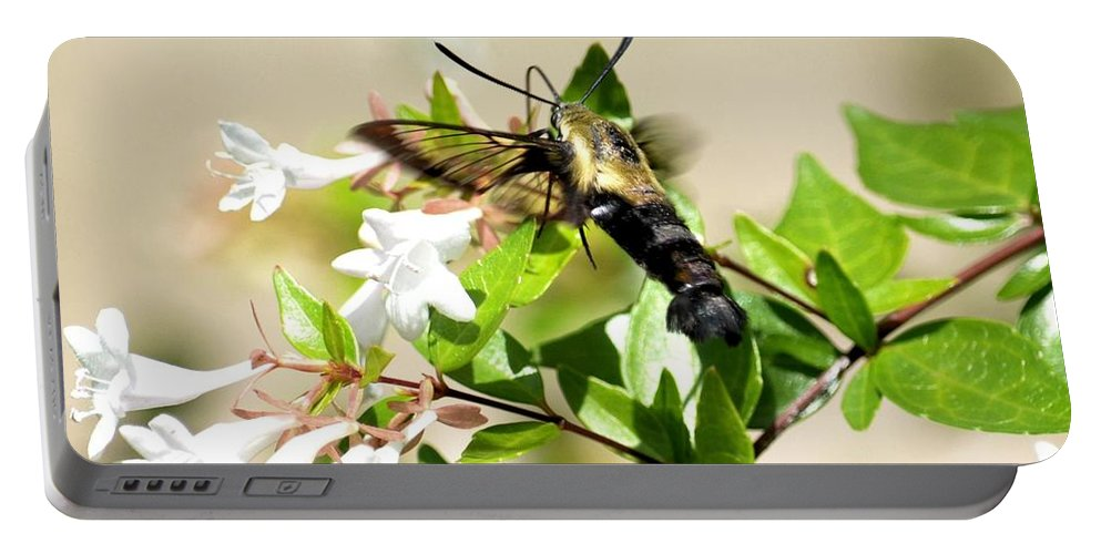 Sphinx Portable Battery Charger featuring the photograph A Sphinx's Pollination by Maria Urso