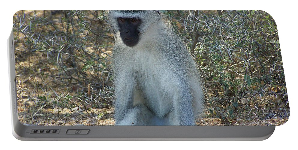 Vervet Monkey Portable Battery Charger featuring the photograph A Time To Relax by Douglas Barnard