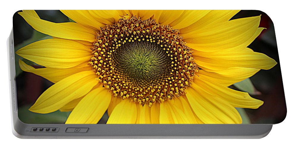 Sunflower Portable Battery Charger featuring the photograph A Touch Of Sunshine - Sunflower by Dora Sofia Caputo Photographic Design and Fine Art