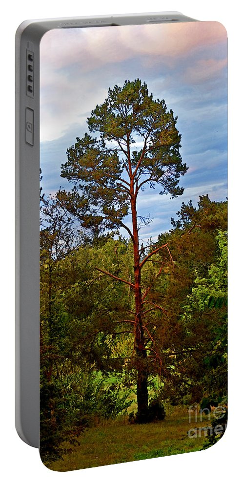 Tree Portable Battery Charger featuring the photograph A Tree by Gwyn Newcombe