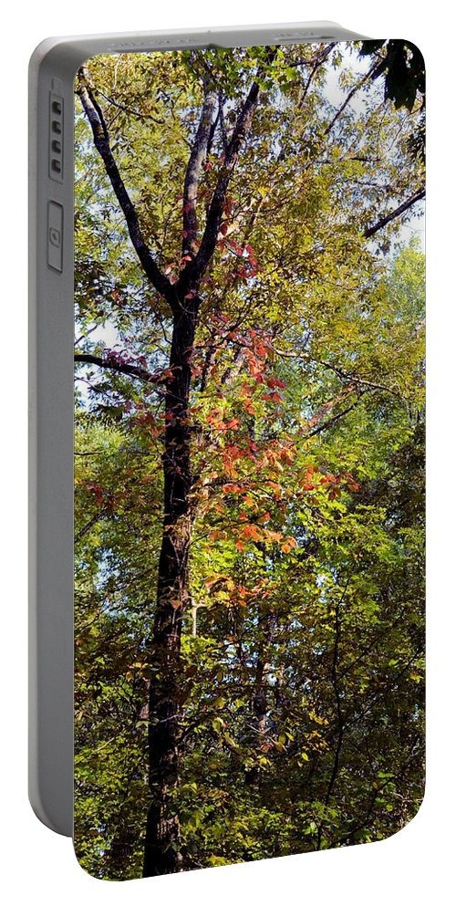 A Tree's Life Portable Battery Charger featuring the photograph A Tree's Life by Maria Urso