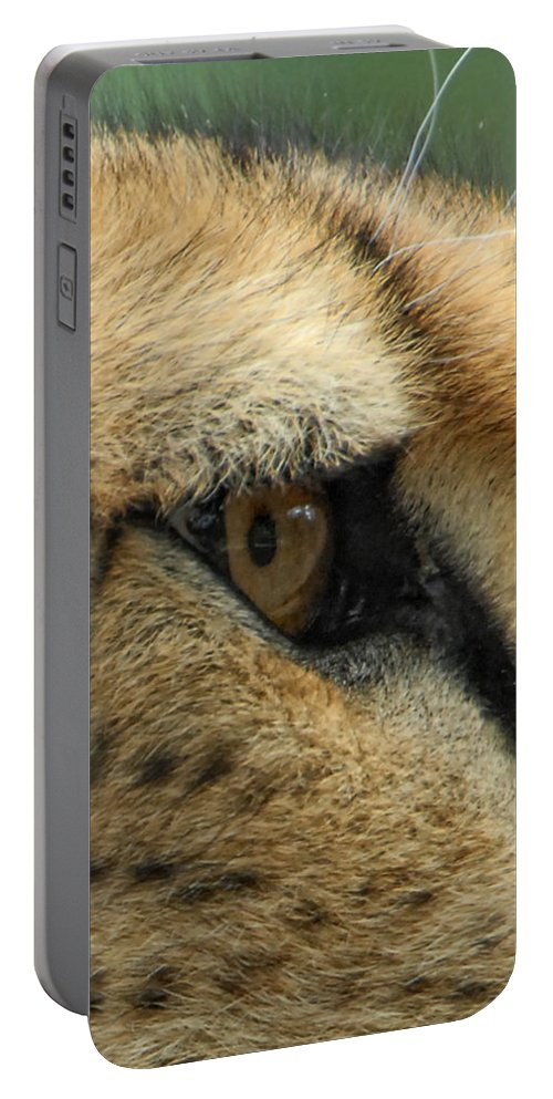 Cheetah Portable Battery Charger featuring the photograph A View To A Kill by Donna Blackhall