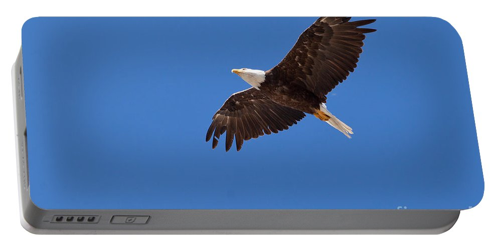 Adult Portable Battery Charger featuring the photograph Adult Bald Eagle Soaring Haliaeetus Leucocephalus by Stephan Pietzko