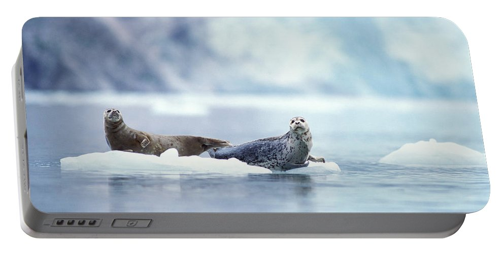 Adult Portable Battery Charger featuring the photograph Adult Pacific Harbor Seals On An Ice by Steven J. Kazlowski / GHG