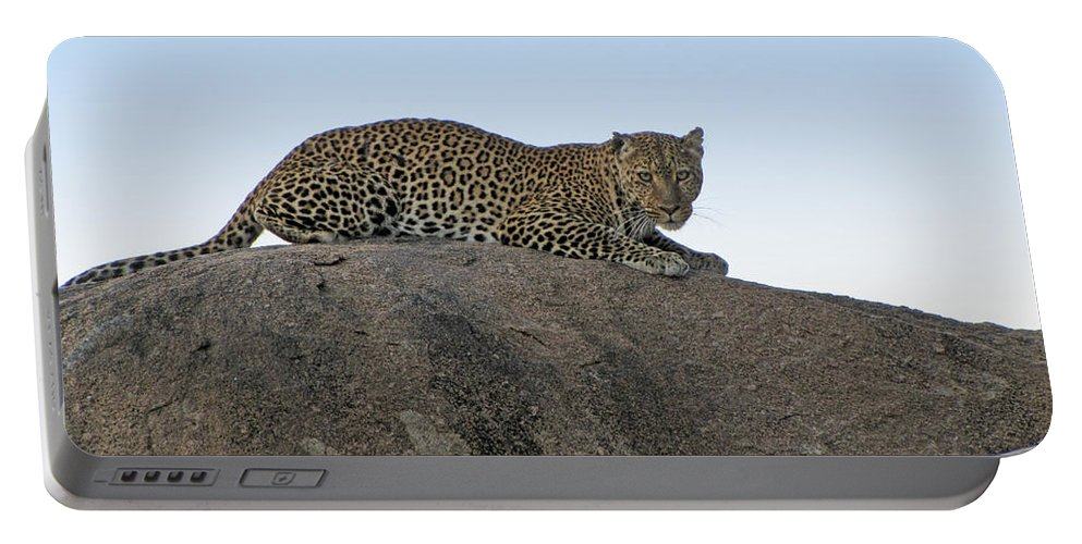 Africa Portable Battery Charger featuring the photograph African Safari Leopard 1 by Jeff Brunton
