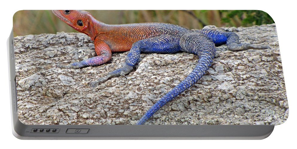 Africa Portable Battery Charger featuring the photograph African Safari Lizard by Jeff Brunton
