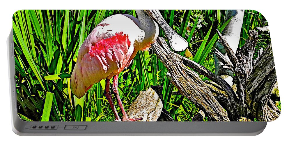 African Spoonbill In San Diego Zoo Safari Park In Escondido Portable Battery Charger featuring the photograph African Spoonbill In San Diego Zoo Safari Park In Escondido-california by Ruth Hager