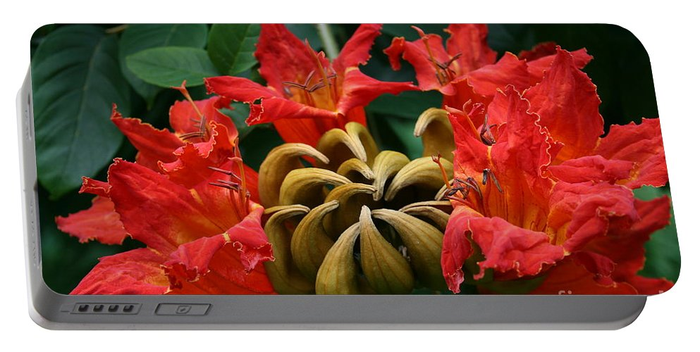 Aloha Portable Battery Charger featuring the photograph African Tulip Tree by Sharon Mau