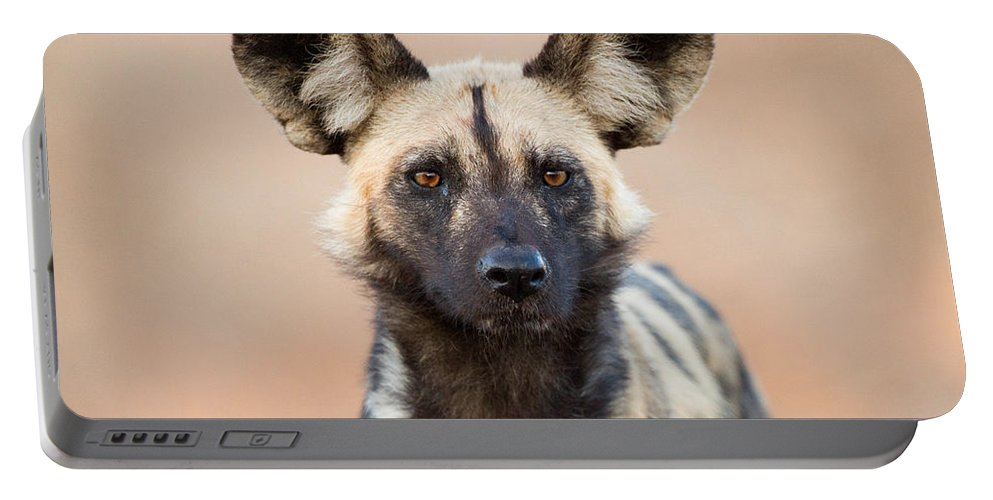 African Wild Dog Portable Battery Charger featuring the photograph African Wild Dog by Max Waugh