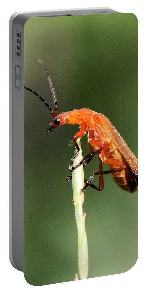 Beetle Portable Battery Charger featuring the photograph Ah - I Made It To The Top by Doris Potter