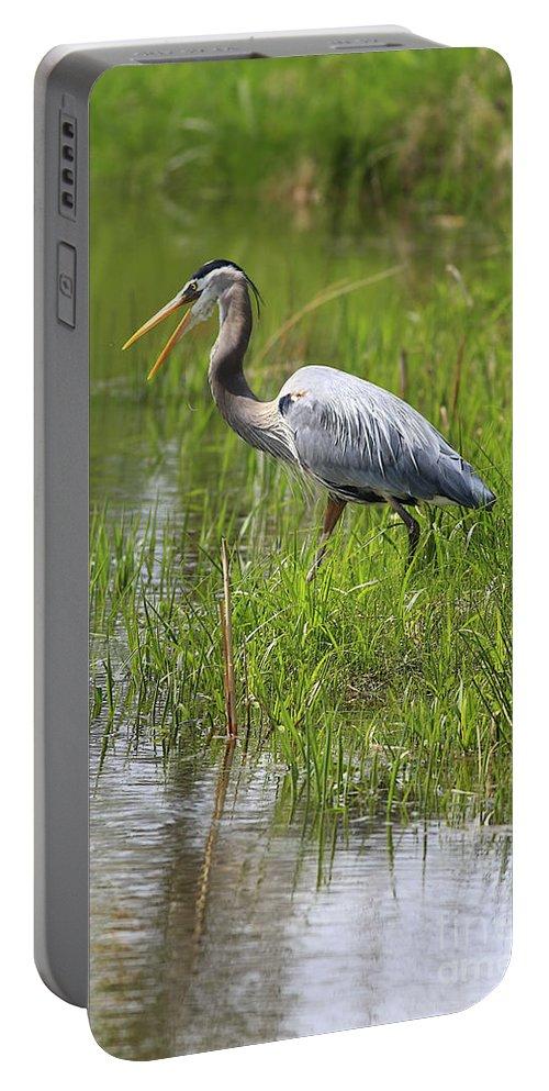 Bird Portable Battery Charger featuring the photograph Ah That Tastes Good by Deborah Benoit