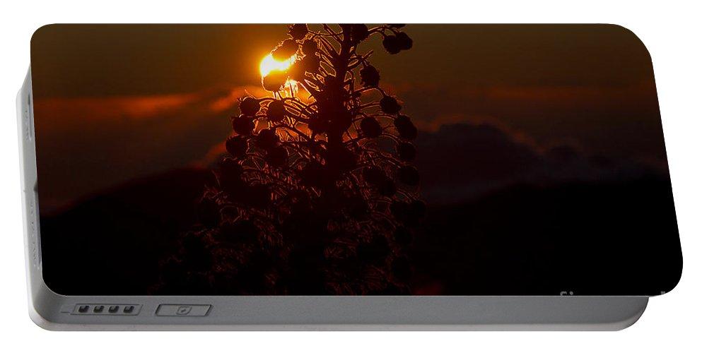 Aloha Portable Battery Charger featuring the photograph Ahinahina - Silversword - Argyroxiphium Sandwicense - Sunrise On The Summit Haleakala Maui Hawaii by Sharon Mau