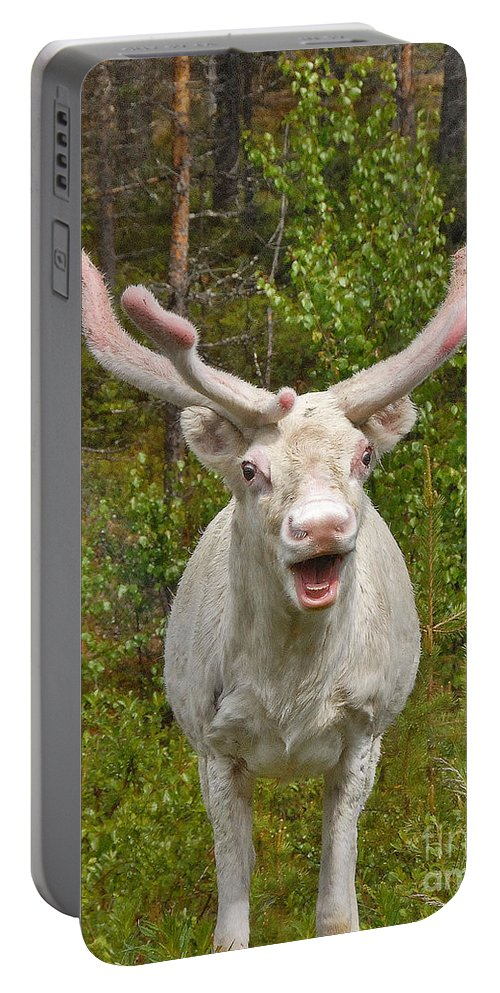 Albino Reindeer Archival Print Portable Battery Charger featuring the photograph Albino Reindeer by Mae Wertz
