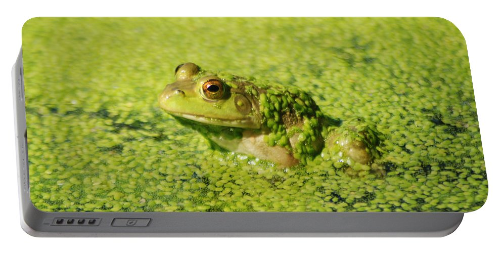 Green Algae Portable Battery Charger featuring the photograph Algae Covered Frog by Optical Playground By MP Ray