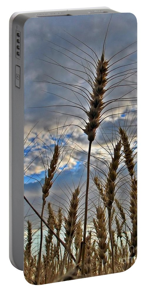 Wheat Portable Battery Charger featuring the photograph All About Wheat by Sara Raber