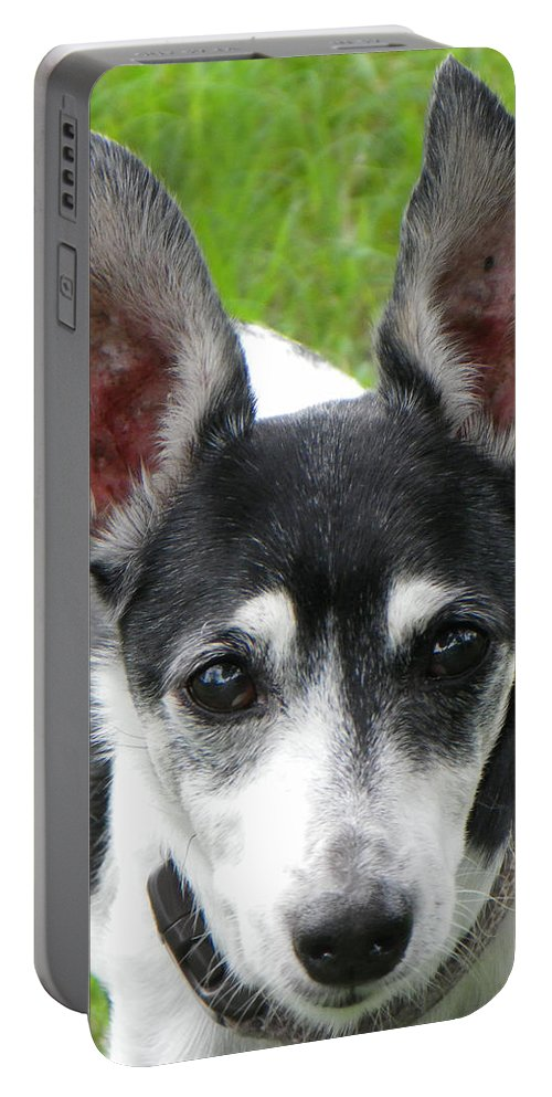 Dog Portable Battery Charger featuring the photograph All Ears by Rosalie Scanlon
