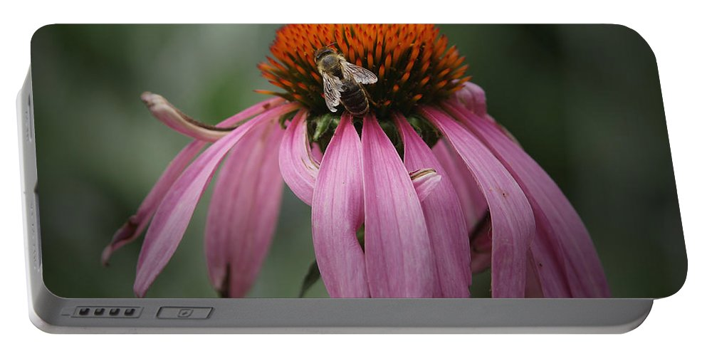 Cone Flowers Portable Battery Charger featuring the photograph All Mine by Ernie Echols