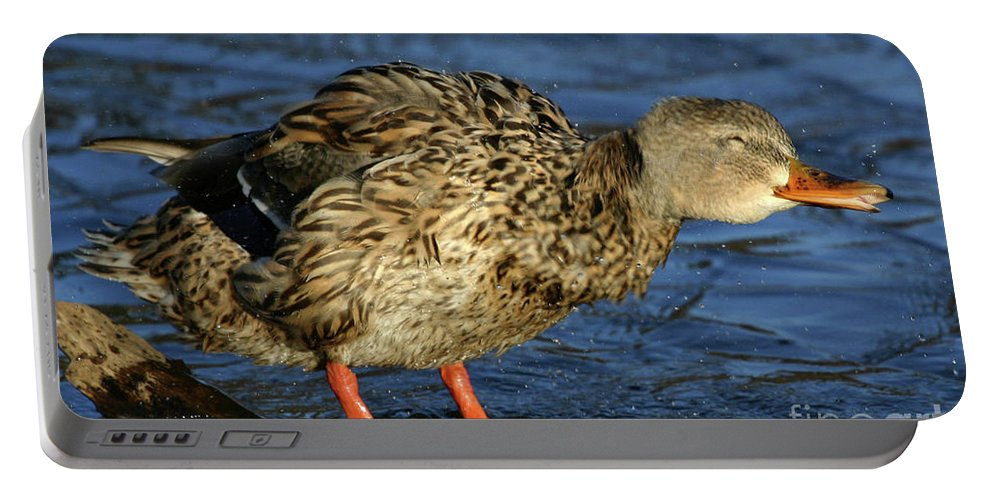 Mallard Portable Battery Charger featuring the photograph All Shook Up by Karol Livote