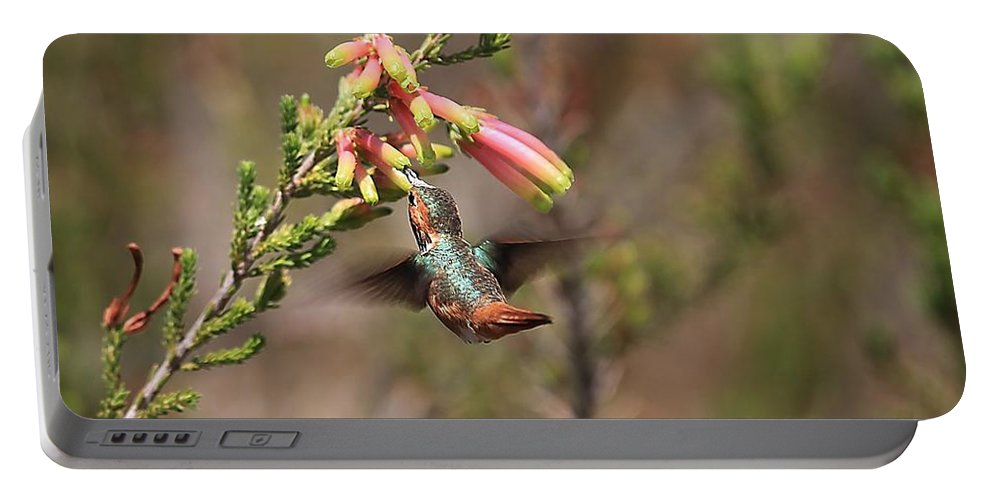 Bird Portable Battery Charger featuring the photograph Allen Hummingbird In Flight by Randy Matthews