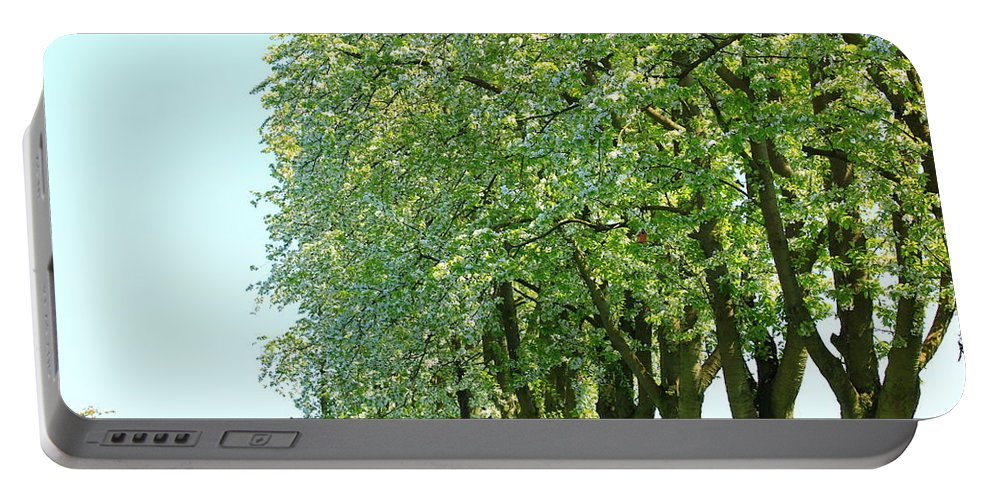 Autumn Portable Battery Charger featuring the photograph Alley Of Trees by Amanda Mohler