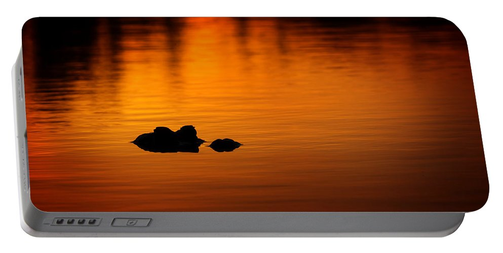 Alligator Portable Battery Charger featuring the photograph Alligator Dusk by Mark Andrew Thomas