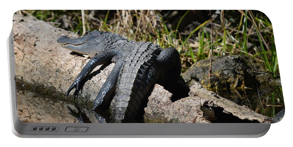 Alligator Portable Battery Charger featuring the photograph Alligator Sunbathing by Linda Kerkau