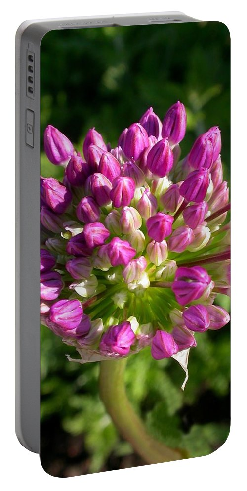 Allium Bud Card Portable Battery Charger featuring the photograph Allium by Cynthia Wallentine