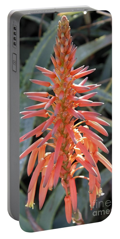Aloe Vera Portable Battery Charger featuring the photograph Aloe Vera Flower by Lee Serenethos