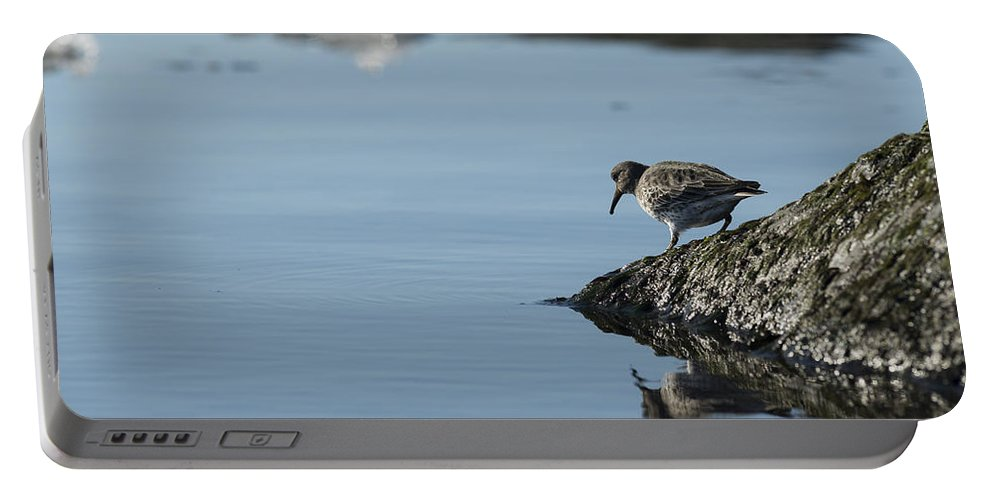 Sandpiper Portable Battery Charger featuring the photograph Alone by Ted Raynor