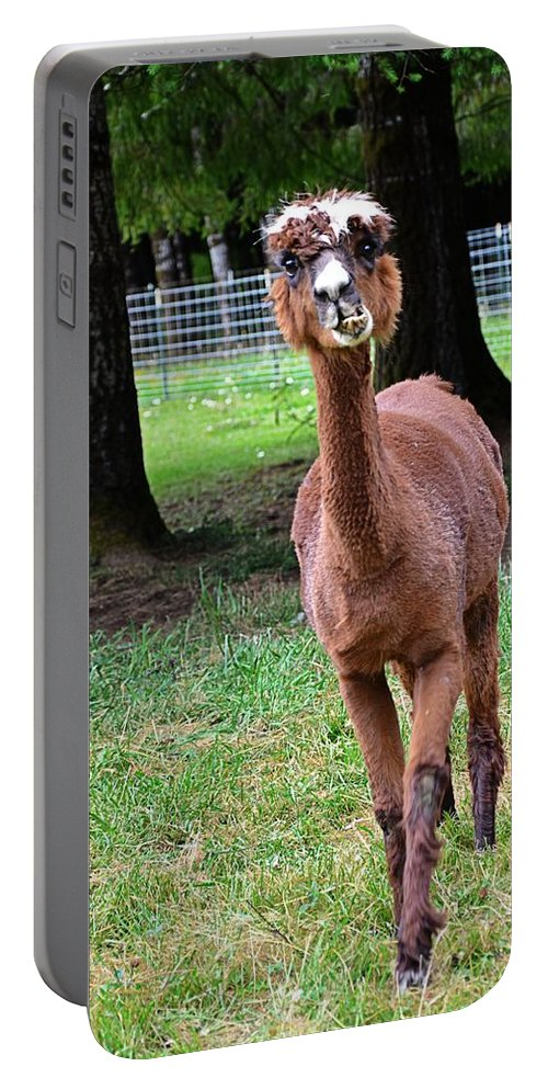 Yachats Portable Battery Charger featuring the photograph Alpaca Brown by Image Takers Photography LLC - Carol Haddon