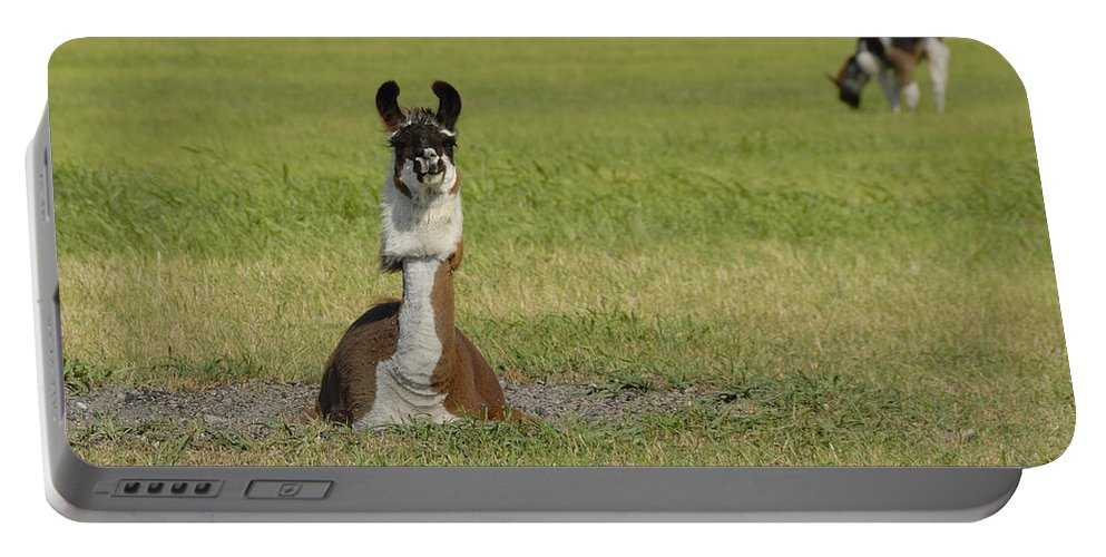 Llama Portable Battery Charger featuring the photograph Alpaca by Charles Beeler
