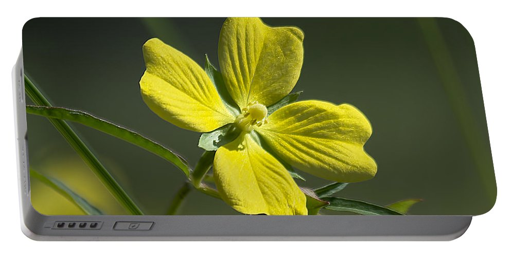 Nature Portable Battery Charger featuring the photograph Amarillo by Kenneth Albin