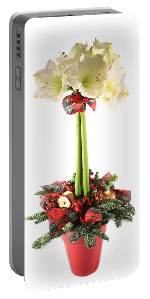 Amaryllidaceae Portable Battery Charger featuring the photograph Amaryllis by Deborah Benbrook