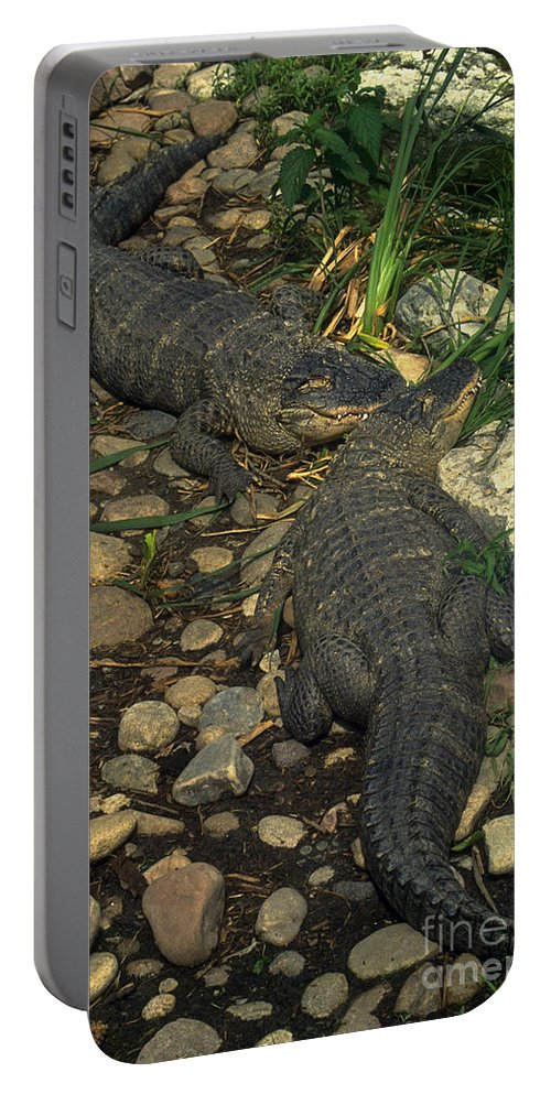 Alligator Portable Battery Charger featuring the photograph American Alligators by Gary Gingrich Galleries