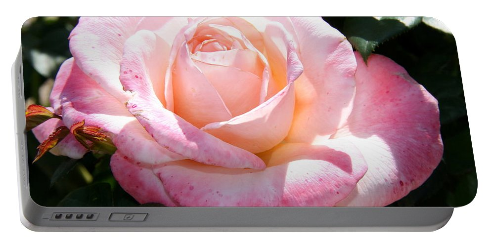 Rose Portable Battery Charger featuring the photograph American Beauty I by Christiane Schulze Art And Photography