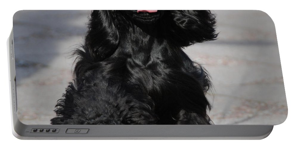 American Cocker Spaniel Portable Battery Charger featuring the photograph American Cocker Spaniel In Action by Camilla Brattemark