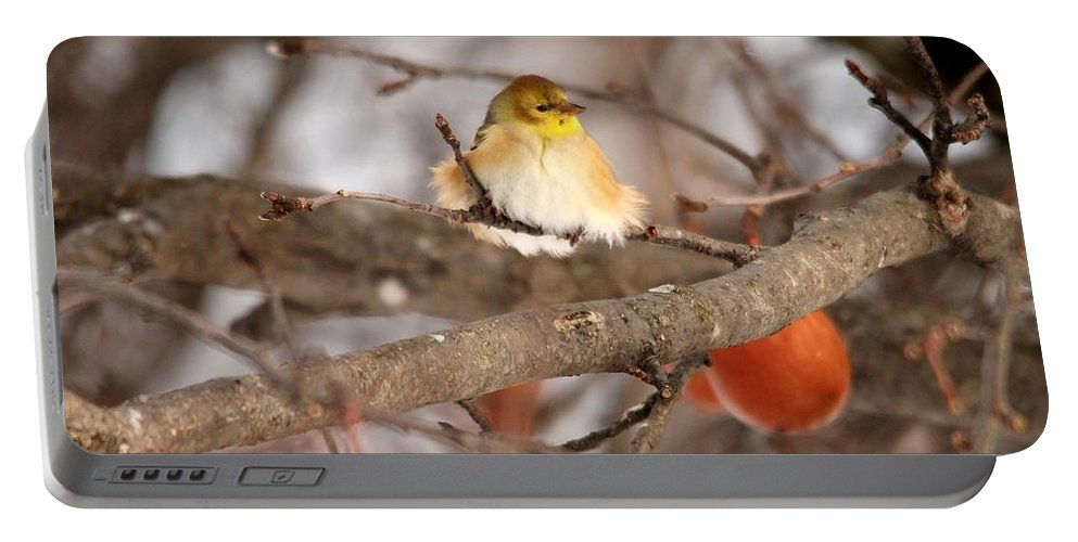 Mccombie Portable Battery Charger featuring the photograph American Goldfinch In Winter by J McCombie