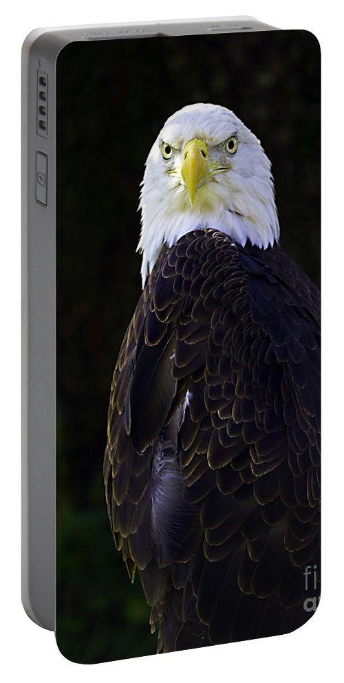 Eagle Portable Battery Charger featuring the photograph American Symbol Three by Ken Frischkorn