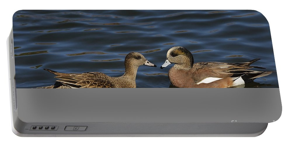 New Mexico Fauna Portable Battery Charger featuring the photograph American Widgeon Pair by John Shaw