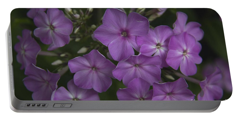 Phlox Portable Battery Charger featuring the photograph Amethyst Phlox by Teresa Mucha
