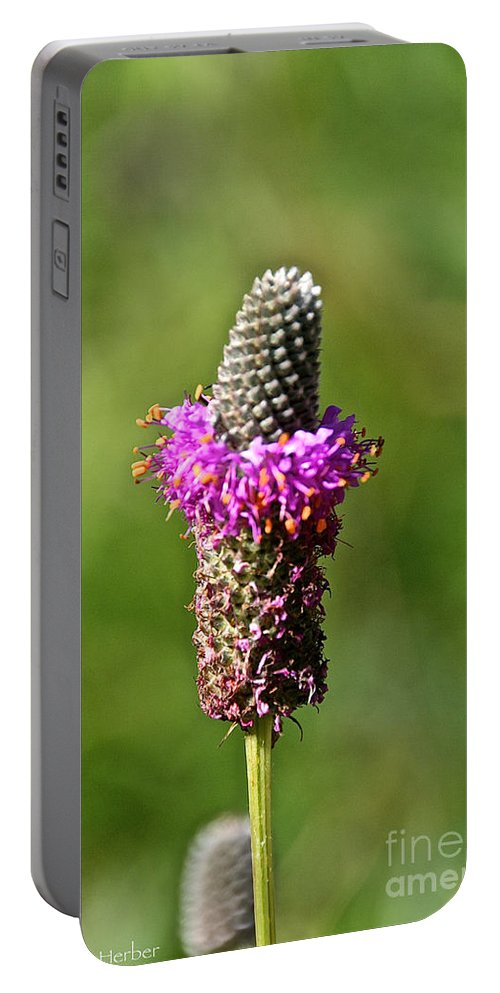 Flower Portable Battery Charger featuring the photograph Amethyst Ring by Susan Herber