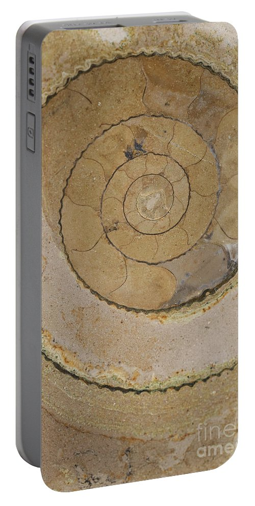 Ammonite Portable Battery Charger featuring the photograph An Ancient Ammonite Pattern Vi by Jaroslaw Blaminsky