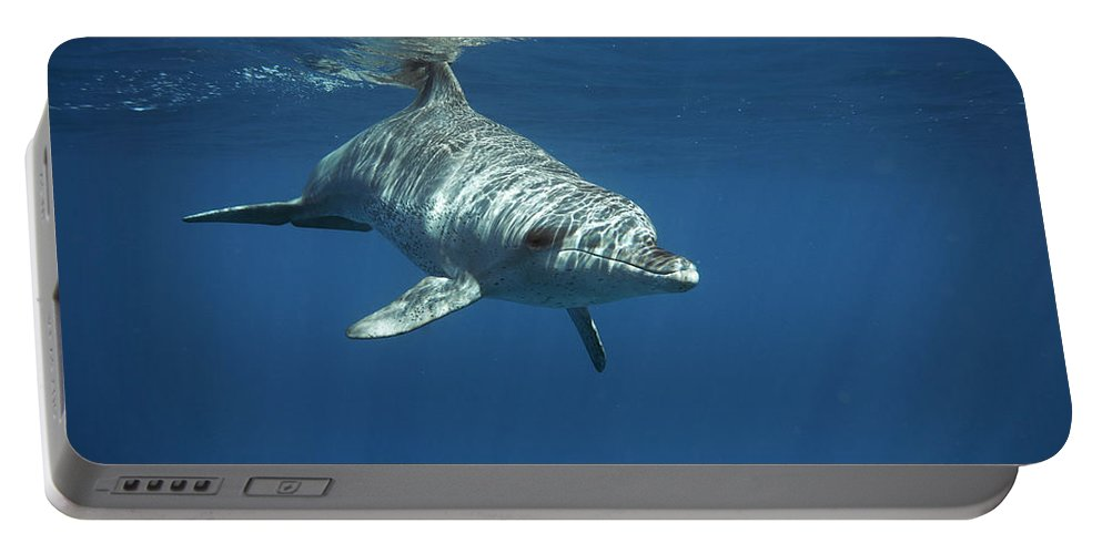 Africa Portable Battery Charger featuring the photograph An Indo Pacific Bottlenose Dolphin by Kennet Havgaard
